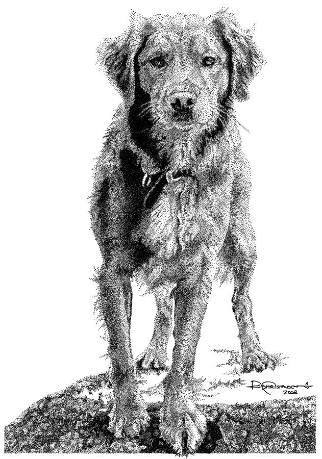 Golden Drawing - Golden by Rob Christensen