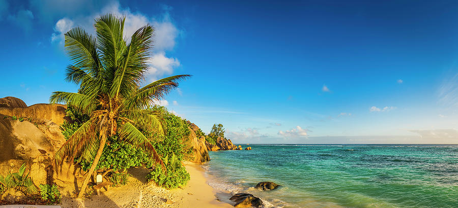 Golden Sand Beach Swaying Palm Trees Photograph by Fotovoyager