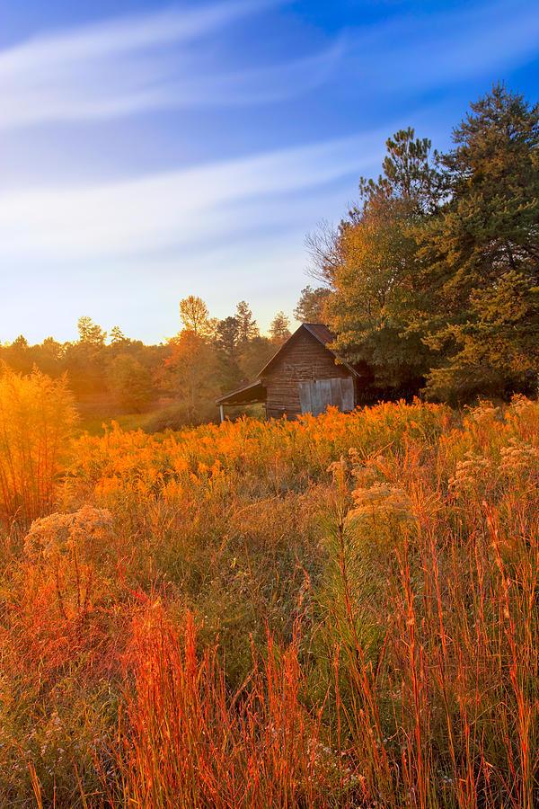 Appalachian Photograph - Golden Sunlight On A Fall Morning - North Georgia by Mark E Tisdale