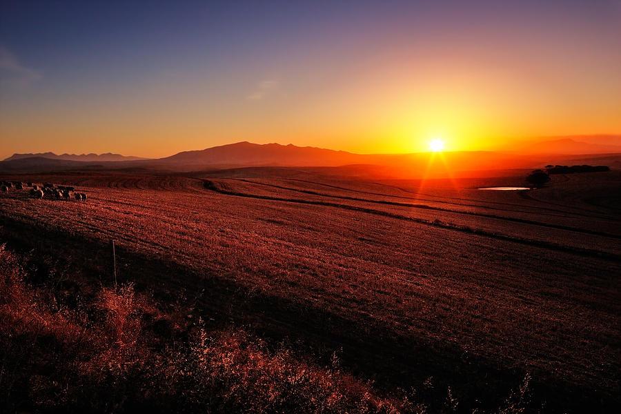 Sunrise Photograph - Golden Sunrise Over Farmland by Johan Swanepoel