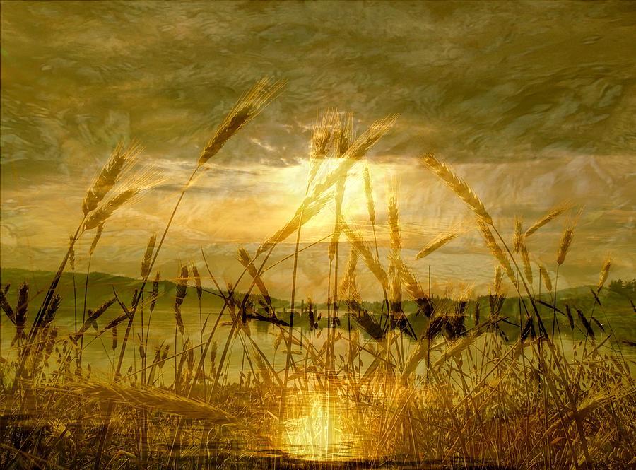 Golden Sunset Photograph - Golden Sunset by Barbara St Jean