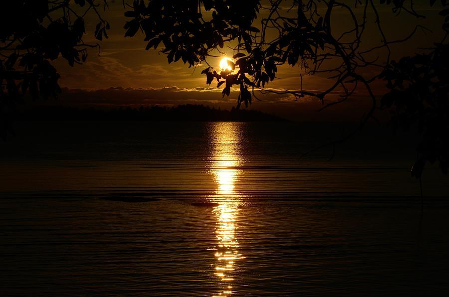 Landscape Photograph - Golden Sunset by David Berner
