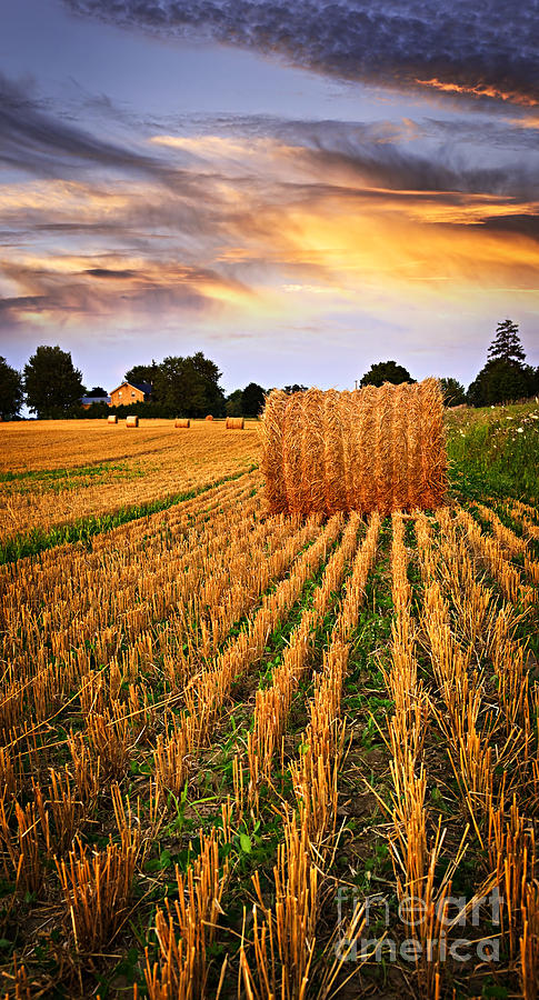 Farm Photograph - Golden Sunset Over Farm Field In Ontario by Elena Elisseeva