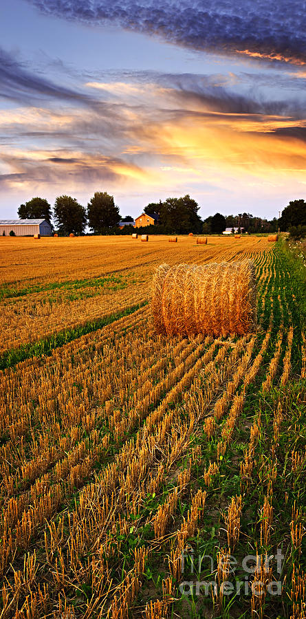 Farm Photograph - Golden Sunset Over Farm Field With Hay Bales by Elena Elisseeva