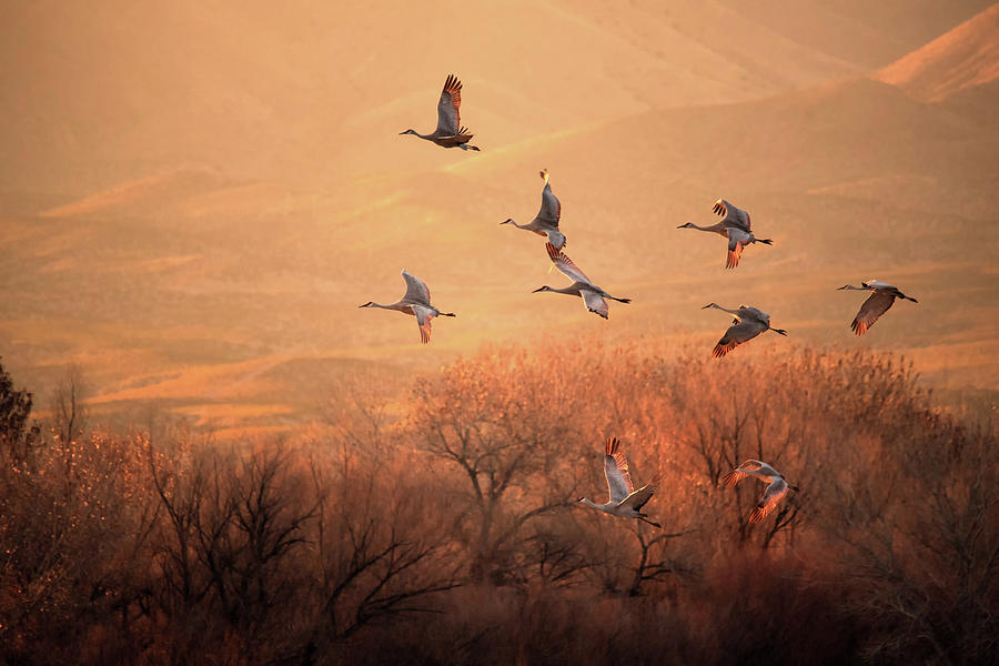 Crane Photograph - Golden Time by Hao Jiang