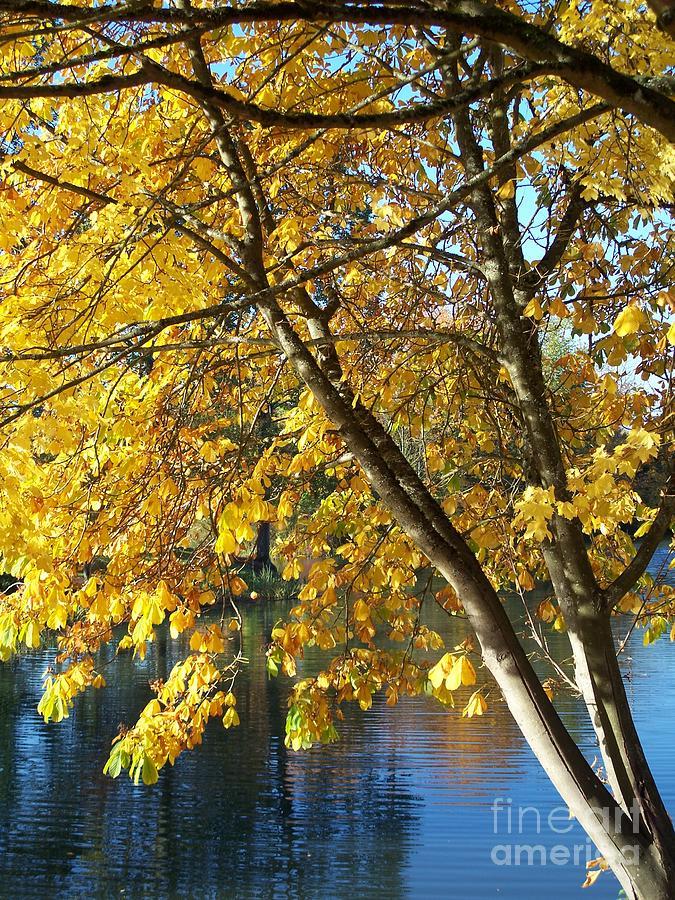 Fall Photograph - Golden Zen by Chalet Roome-Rigdon