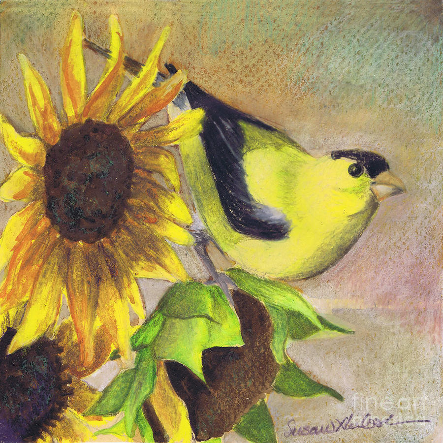 Flower Painting - Goldfinch And Sunflowers by Susan Herbst