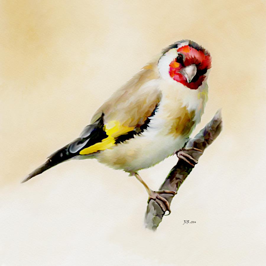 Finch Painting - Goldfinch by Bamalam  Photography