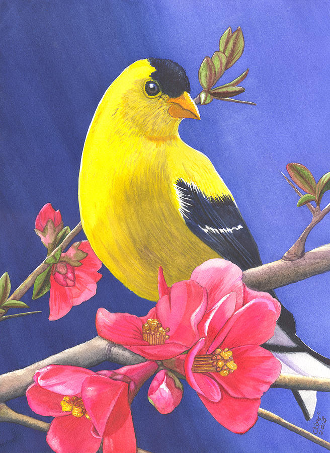 Goldfinch Painting - Goldfinch by Catherine G McElroy