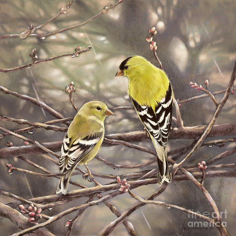 Goldfinch Drawing - Goldfinches In The Rain by Laurie Musser