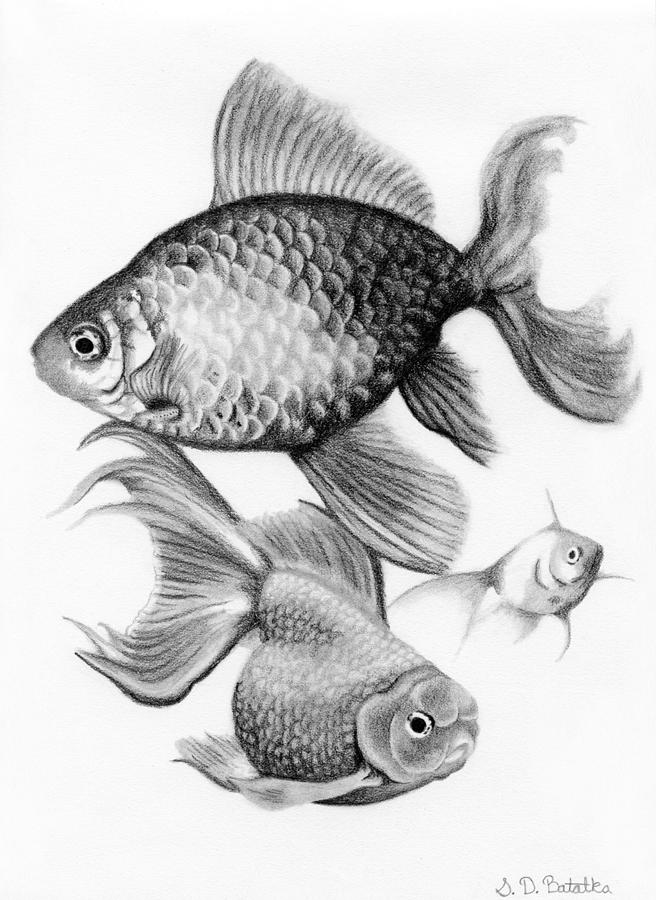 This is a picture of Sly Realistic Fish Drawing