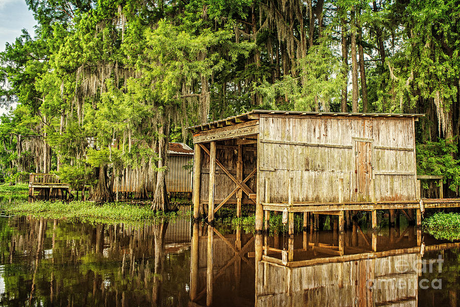 Caddo Lake Photograph - Gone Fishing On Caddo Lake by Tamyra Ayles