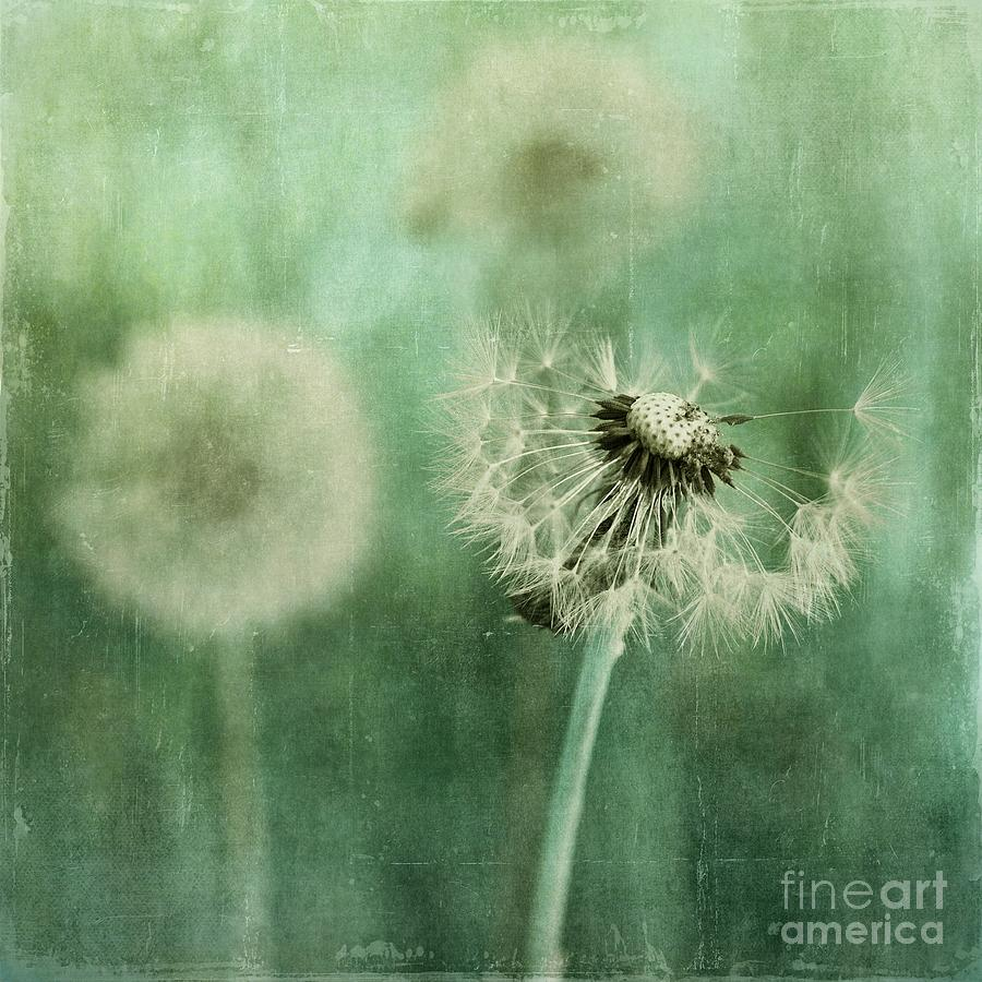 Dandelion Photograph - Gone by Priska Wettstein