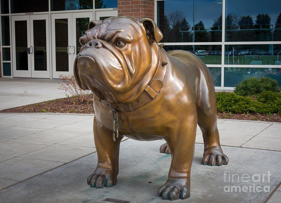 America Photograph - Gonzaga Bulldog by Inge Johnsson