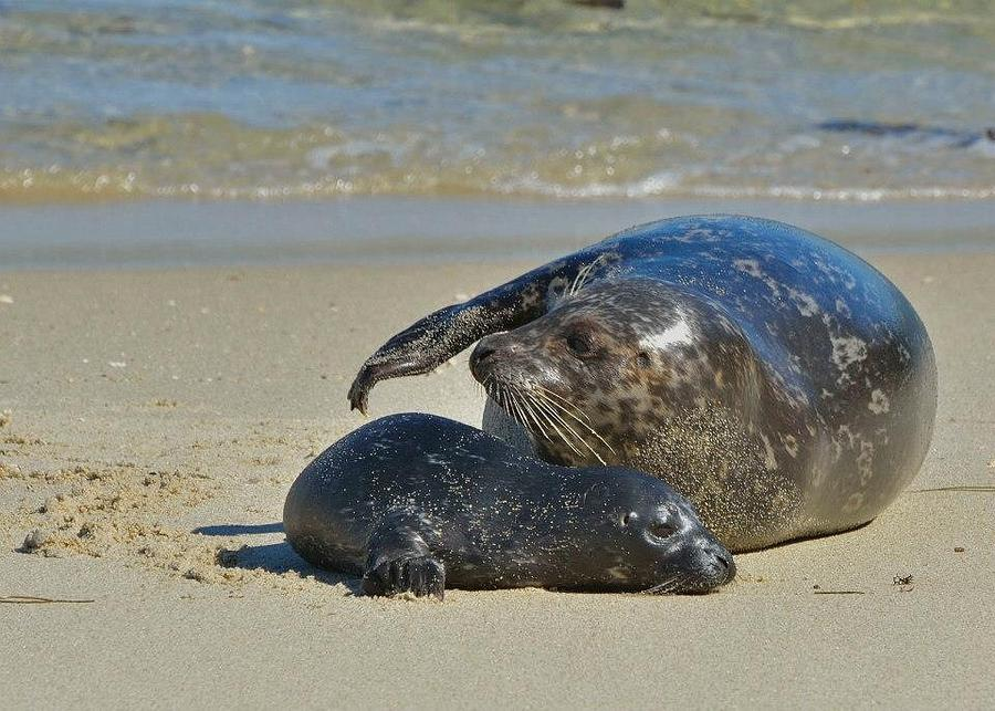 Seals Photograph - Good Baby by Old Pueblo Photography
