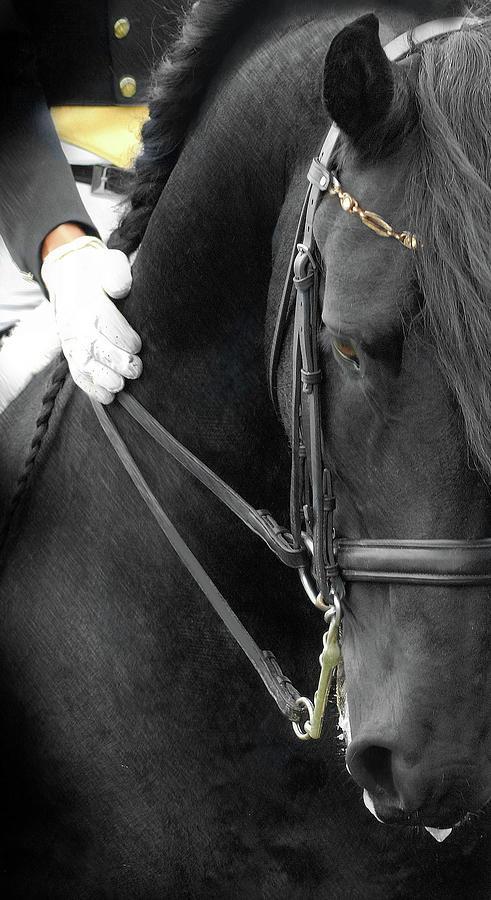 Friesian Horses Photograph - Good Boy by Fran J Scott