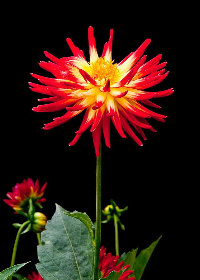 Flower Photograph - Good Day by Paul Johnson