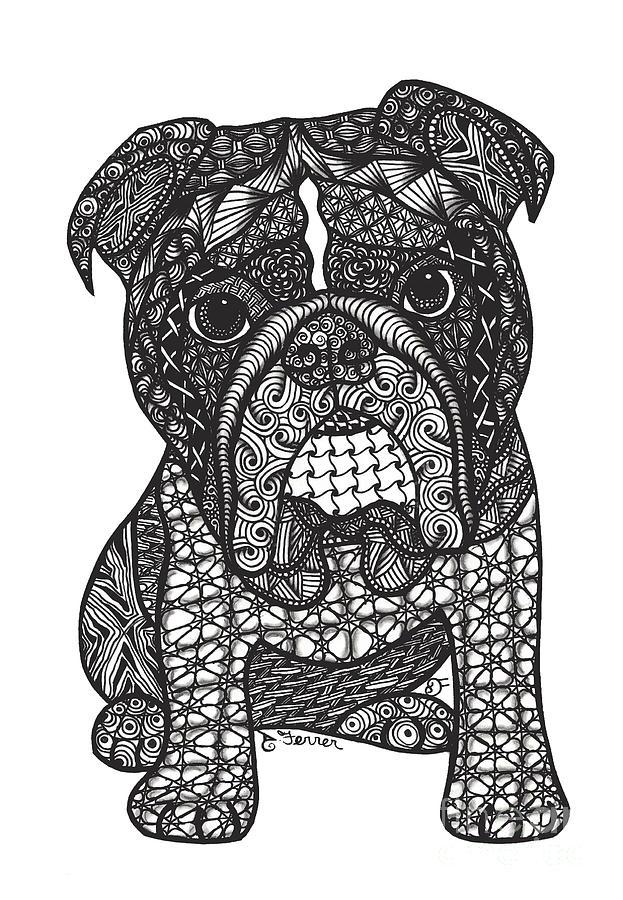 Good Dog - English Bulldog Drawing by Dianne Ferrer