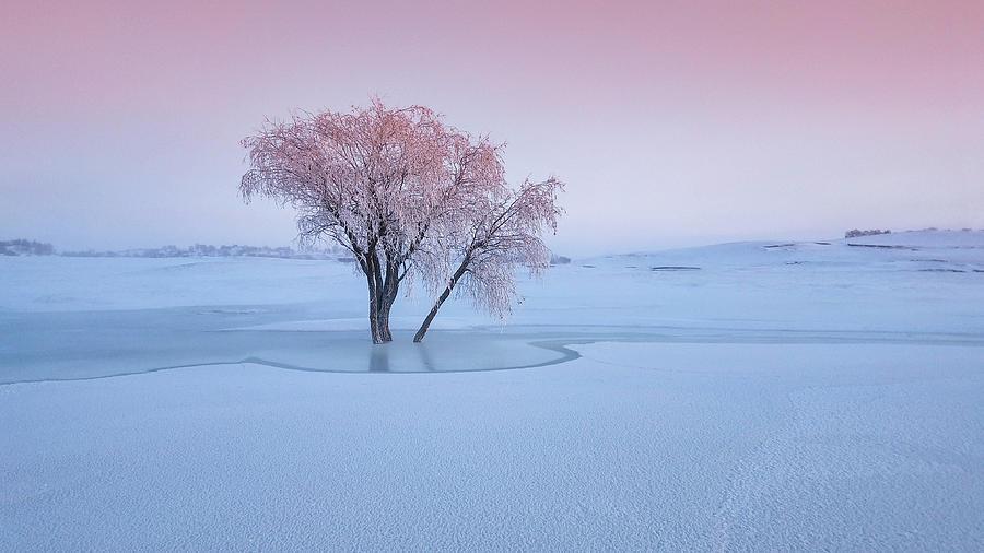 Pastel Photograph - Good Morning by Bingo Z