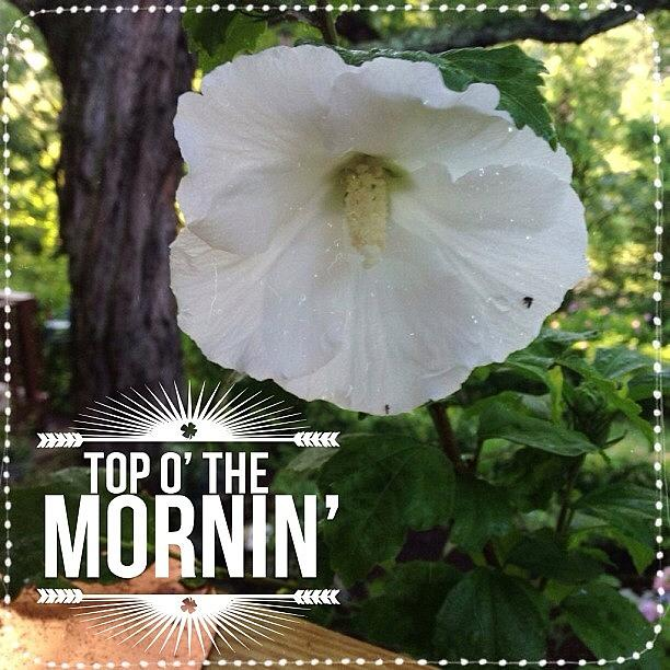 Hibiscus Photograph - Good Morning!  Blooming Today, My White by Teresa Mucha