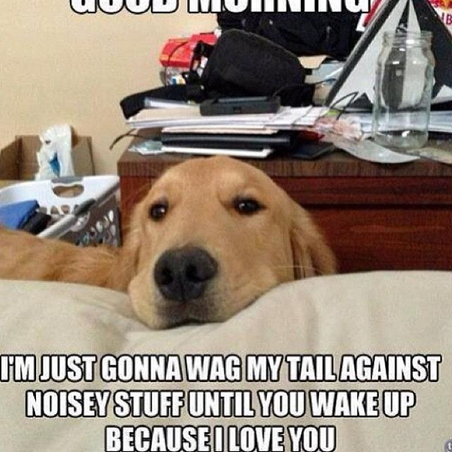 Good Morning Meme Dog : Good morning dog cat cute cutie photograph by keenan