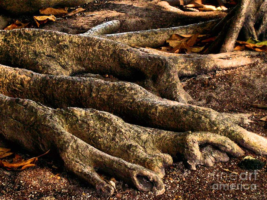 Tree Photograph - Good Roots by Claudette Bujold-Poirier