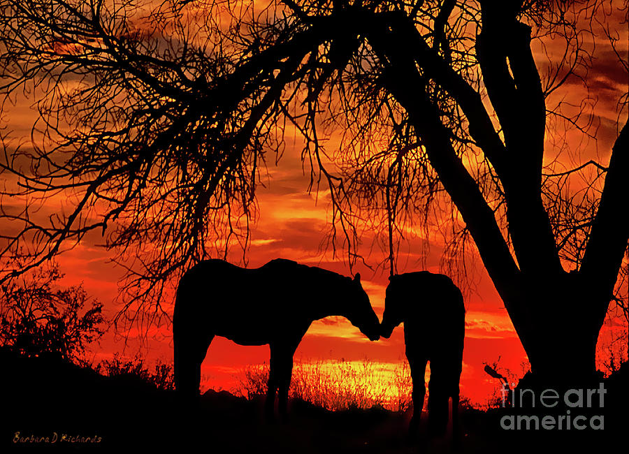 Horses Photograph - Goodnight Kiss by Barbara D Richards