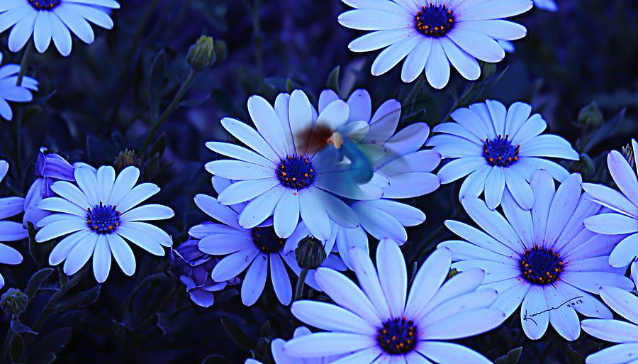 Good Night My Fairy Photograph - Goodnight My Fairy by Kume Bryant