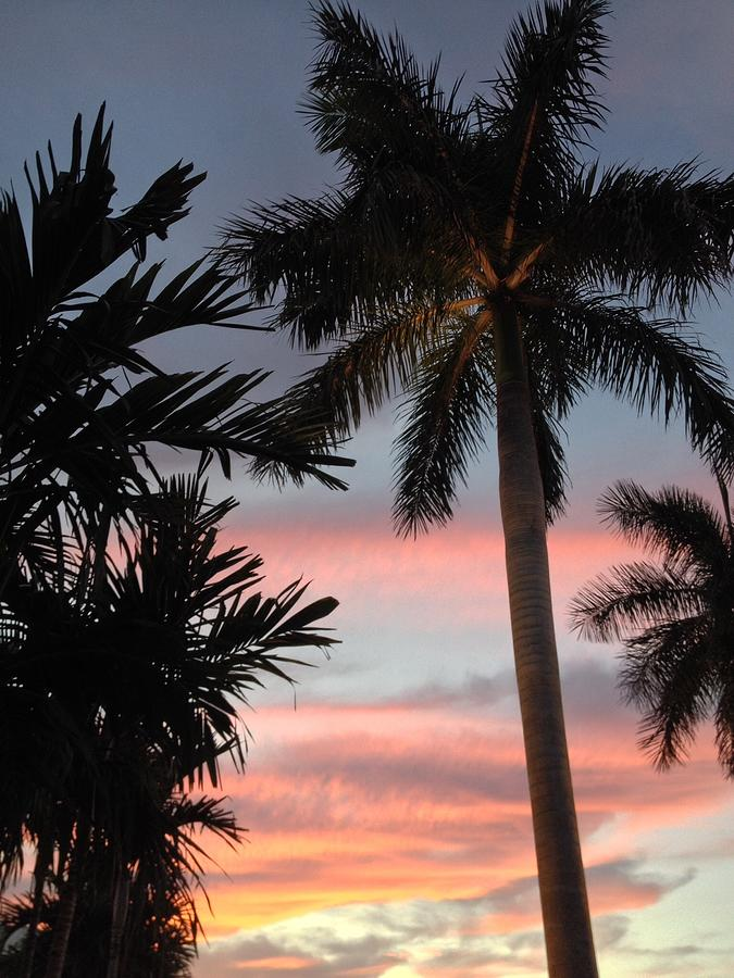 Palm Tree Photograph - Goodnight Waterside  by K Simmons Luna