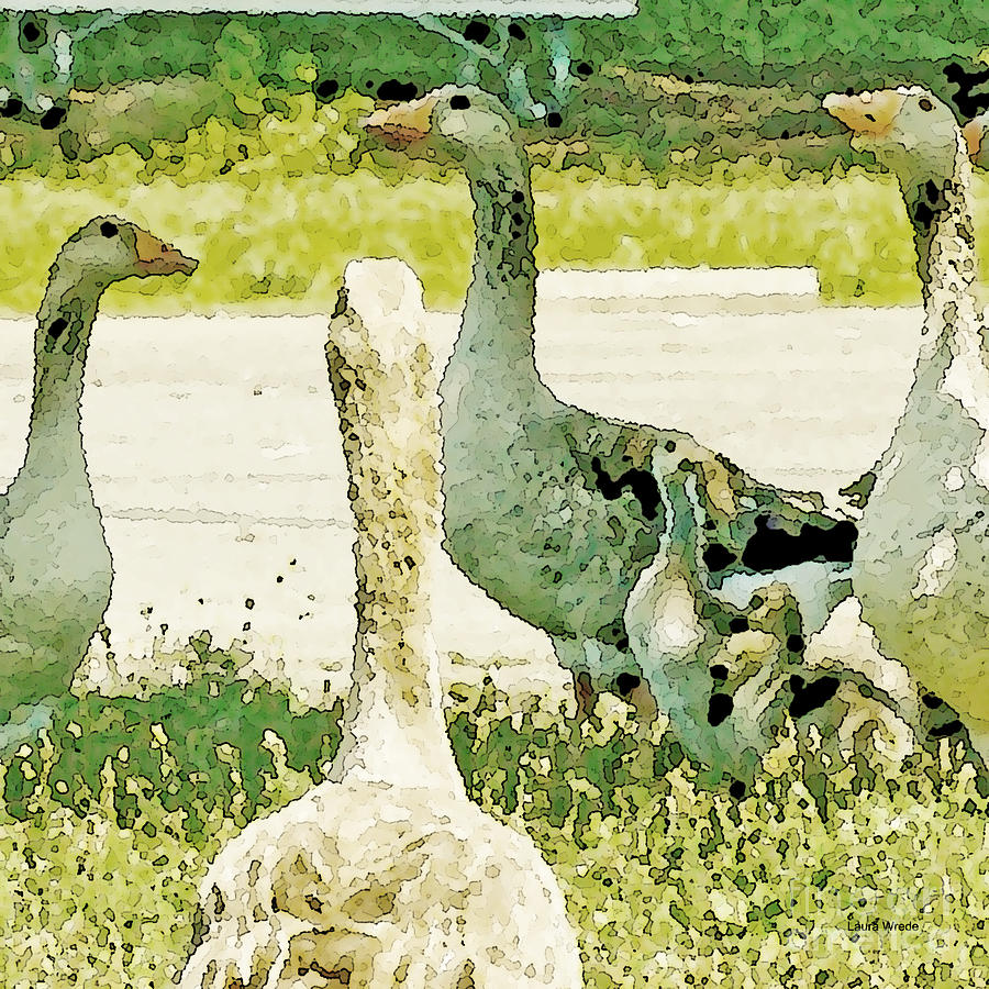 Geese Photograph - Goose Chat by Artist and Photographer Laura Wrede