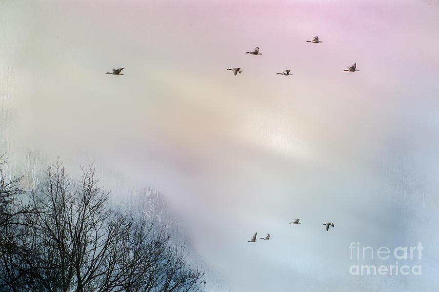 Birds Photograph - Goose Flight by Hannes Cmarits