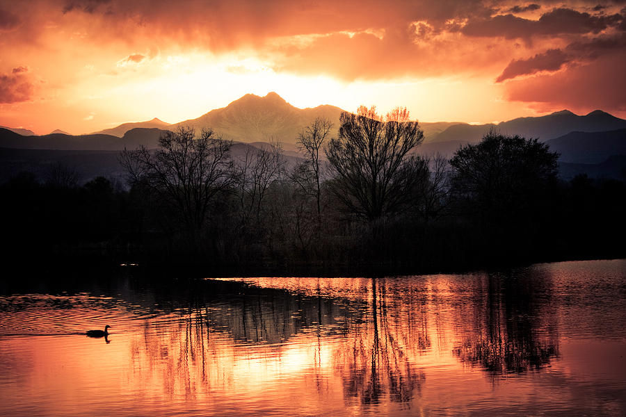 Sunsets Photograph - Goose On Golden Ponds 1 by James BO  Insogna