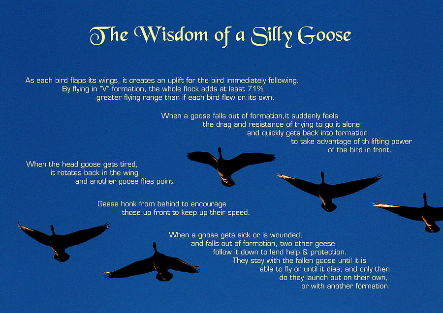 Quotation Photograph - Goose Wisdom by Mike Flynn