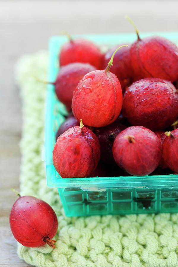 Gooseberries Photograph by Nicolesy