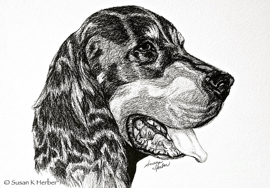 Dog Drawing - Gordon Setter by Susan Herber