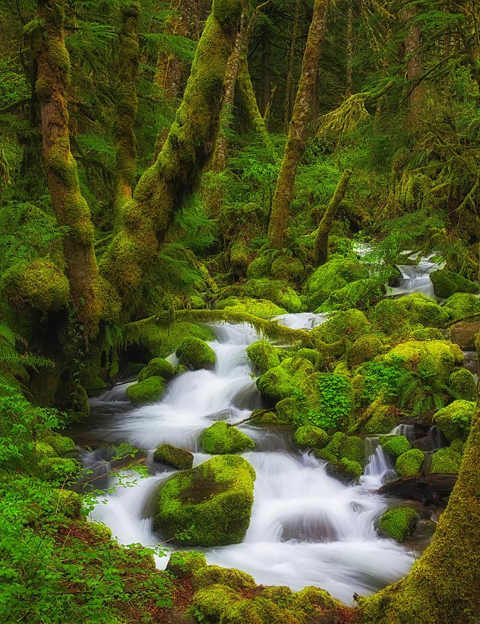 Gorge Greens Photograph