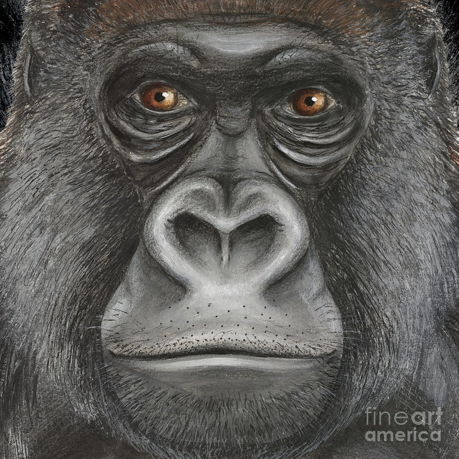 Western Lowland Gorilla Face - Fine Art Print - Stock Illustration - Stock Image Painting