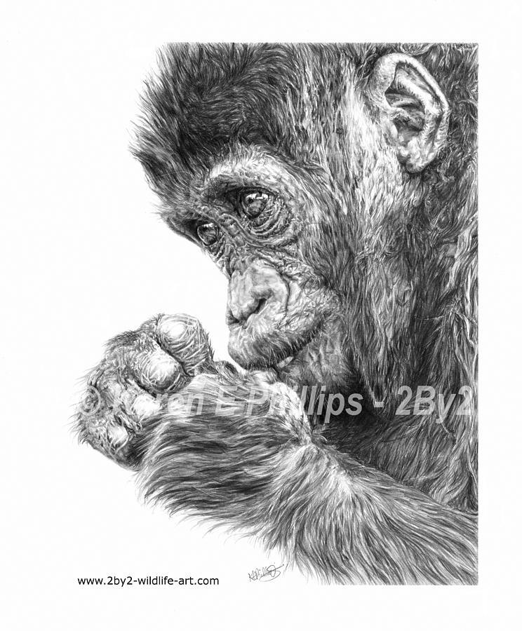 Gorilla Drawing - Gorilla Infant by Karen E Phillips