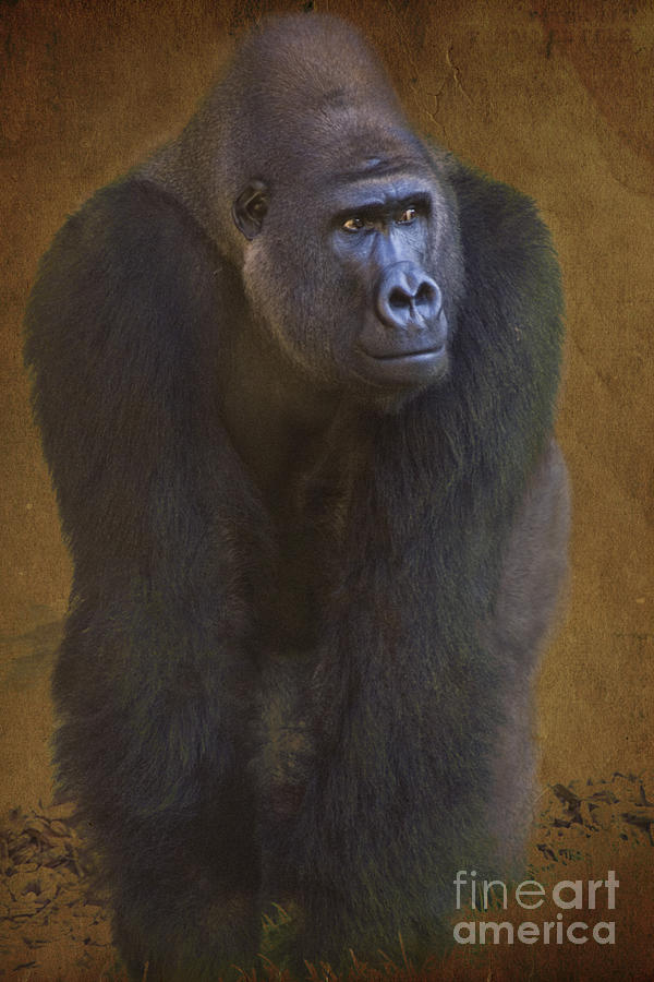 Gorilla The Muscleman Photograph