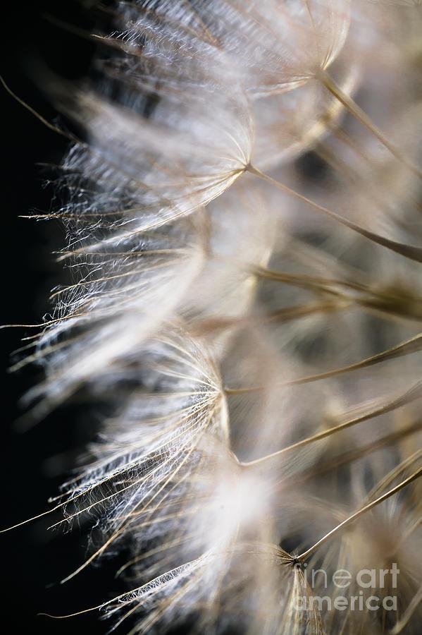 Dandelion Photograph - Gossamer by Jan Bickerton
