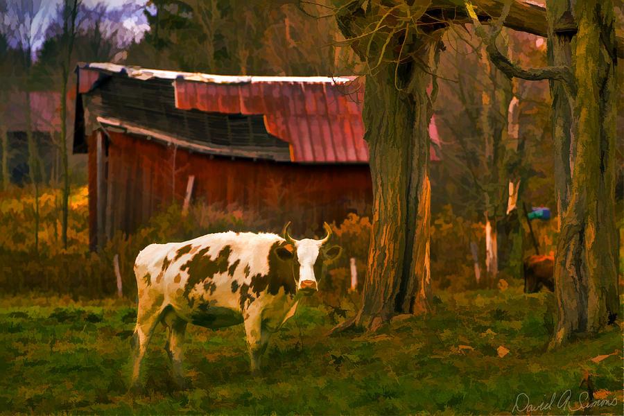 Cow Digital Art - Got Mail? by David Simons