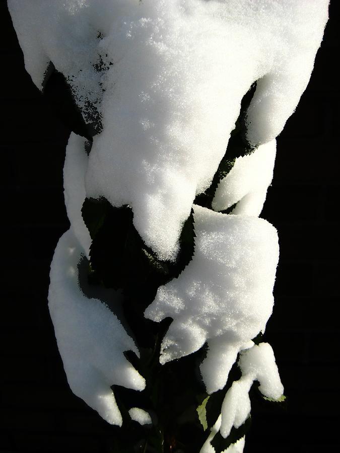 Snow Photograph - Gotcha by Shirley Sirois