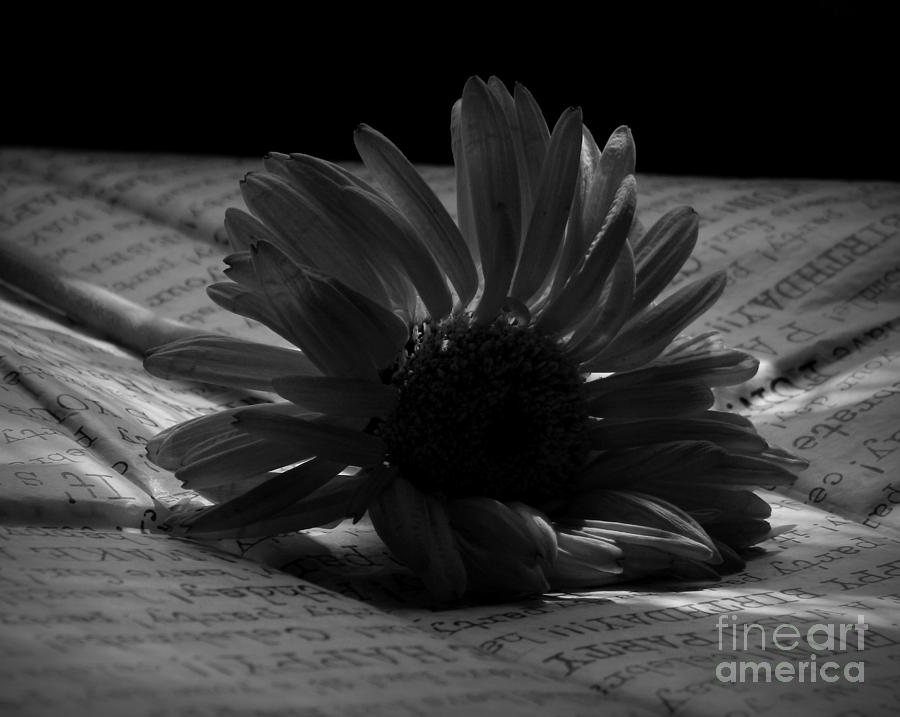 Aster Photograph - Gothic Birthday Flower Bw by Chalet Roome-Rigdon