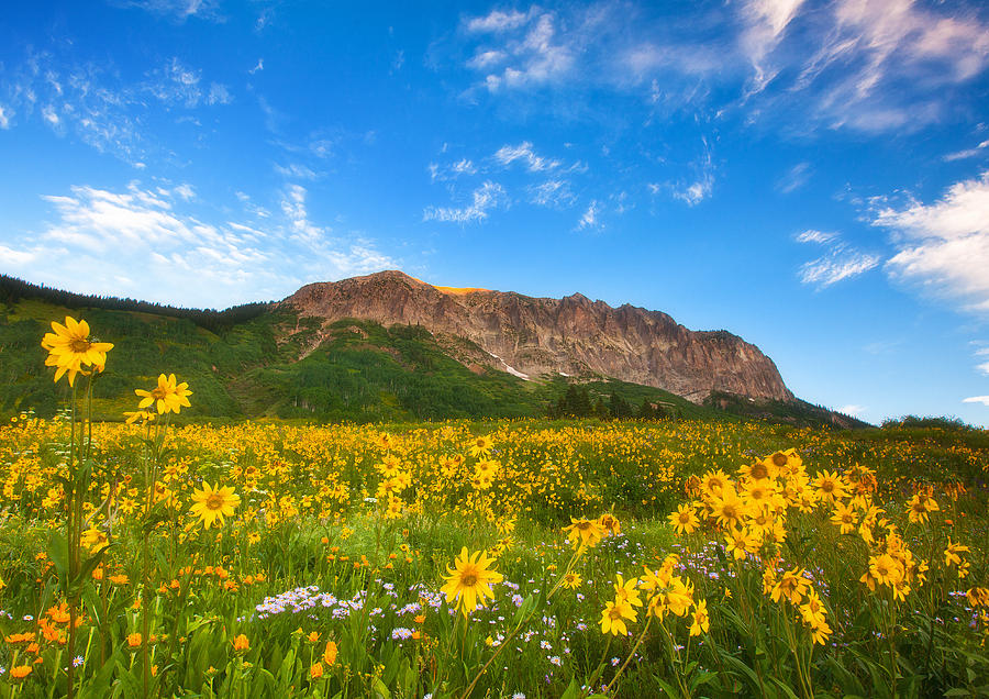 Colorado Landscapes Photograph - Gothic Meadow by Darren  White
