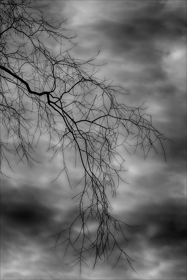 Trees Photograph - Gothic Sky by Robert Ullmann