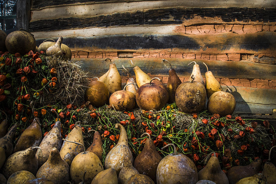 Appalachia Photograph - Gourds by Debra and Dave Vanderlaan