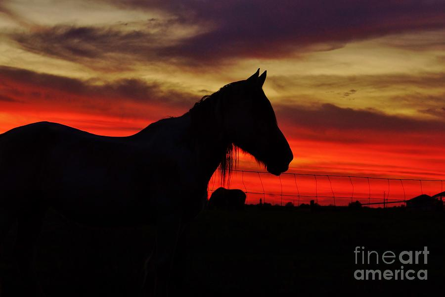 Horse Photograph - Gracie At Sunset by Lynda Dawson-Youngclaus