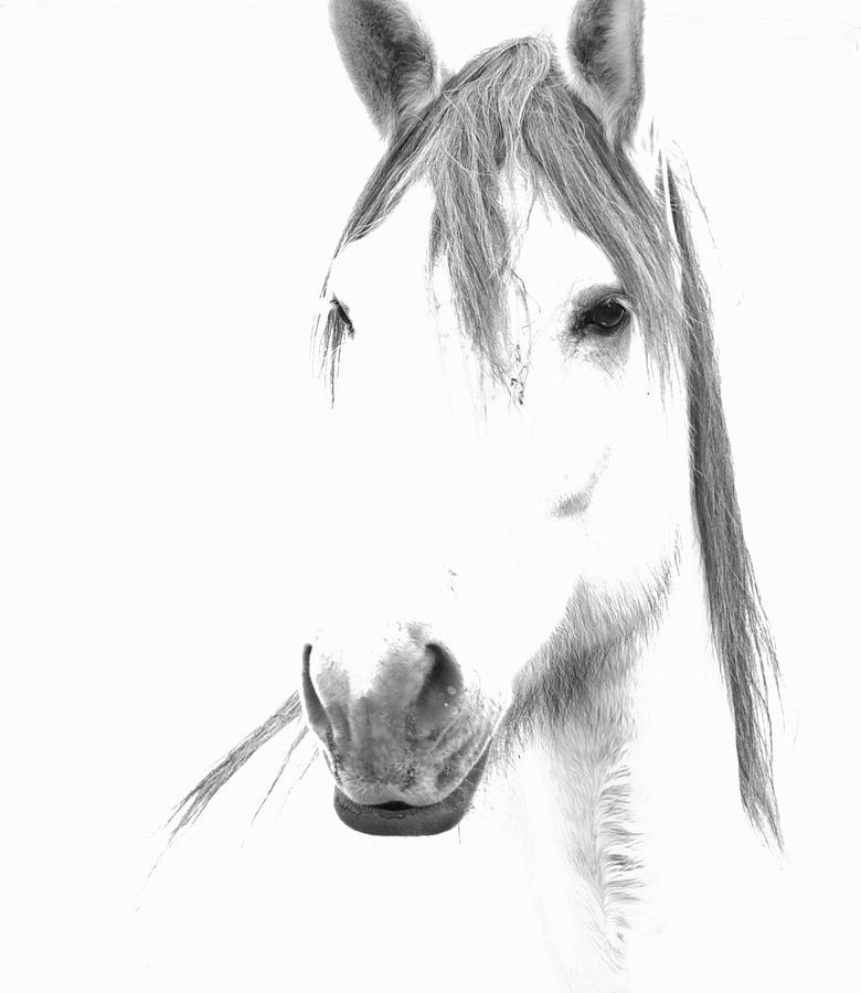 Horse Photograph - Gracie  by Lynda Dawson-Youngclaus