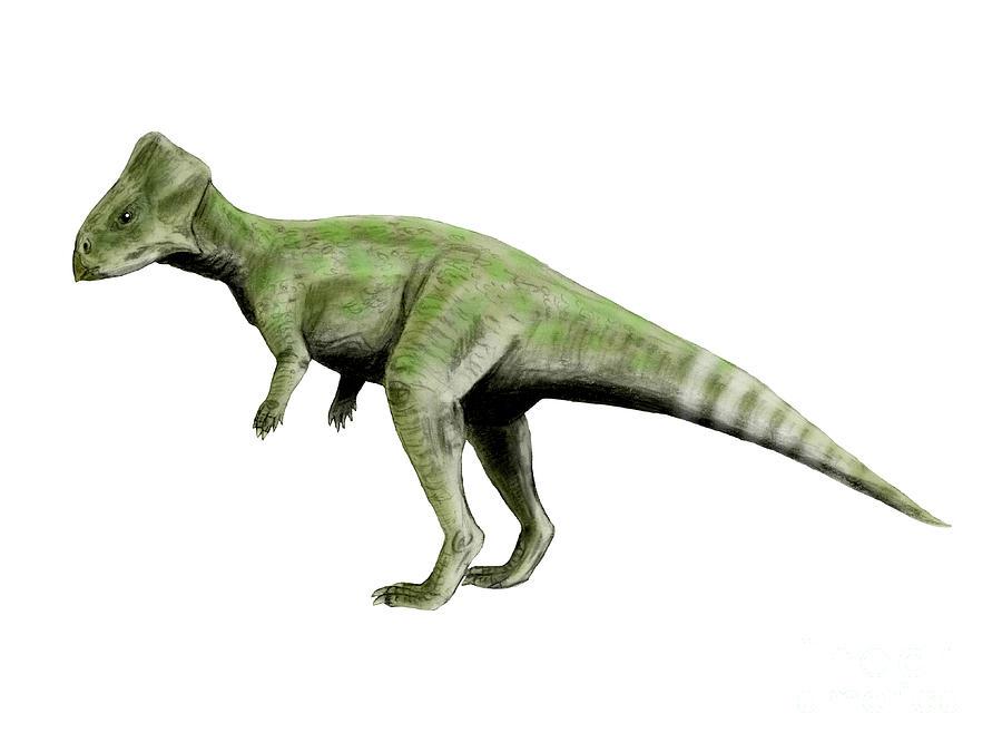 Horizontal Digital Art - Graciliceratops Dinosaur by Nobumichi Tamura