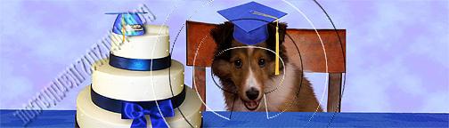Bookmark Photograph - Graduation Sheltie Puppy # 538 by Jeanette K